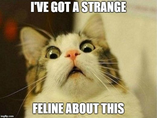 I have a strange feline about this.